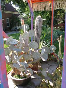 Jeff's cactus house