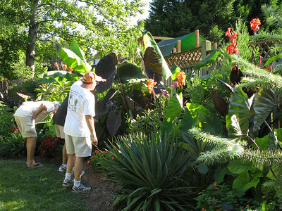 Dave looking for more tropical plants!