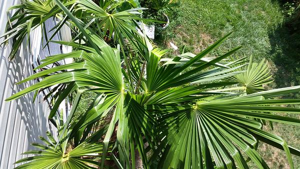 Panama John's Aug 21 2014 - recovery