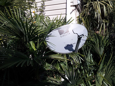 Dish network interference by palms and hardy citrus