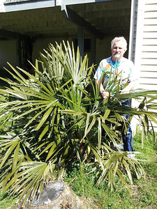 Will with needle palm