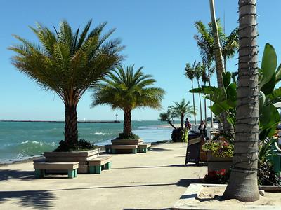 Chicago Oak Street Beach palms