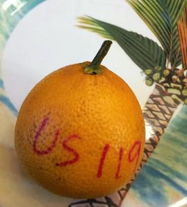 US 119