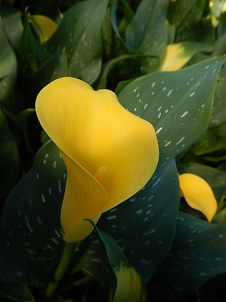 Lush, Colorful, Tropical Plants