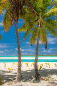 One Foot Island Palms