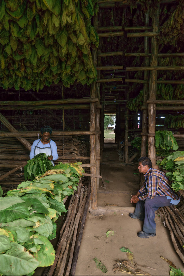 Tobacco House Workers