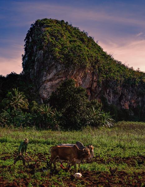 Vinales Cuba Rural Farm
