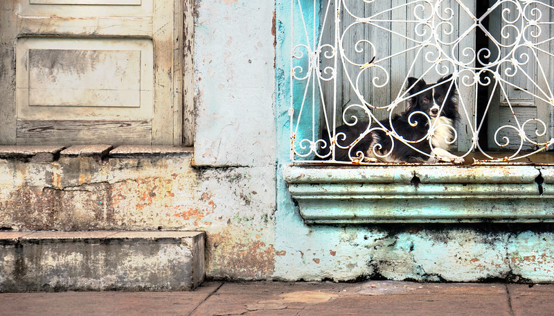 Doorstep Guard Dog