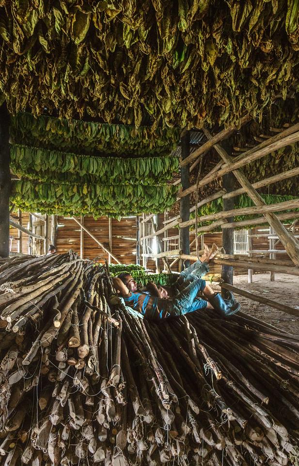 Tobacco House Siesta