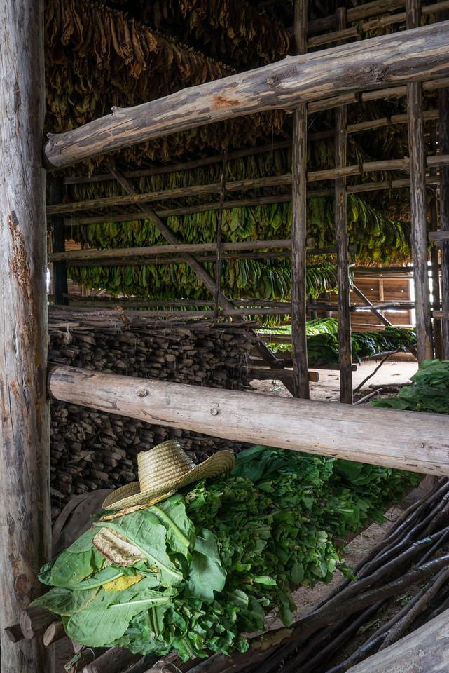 Tobacco House Sombrero