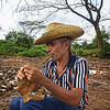 Vinales fresh rolled cigars