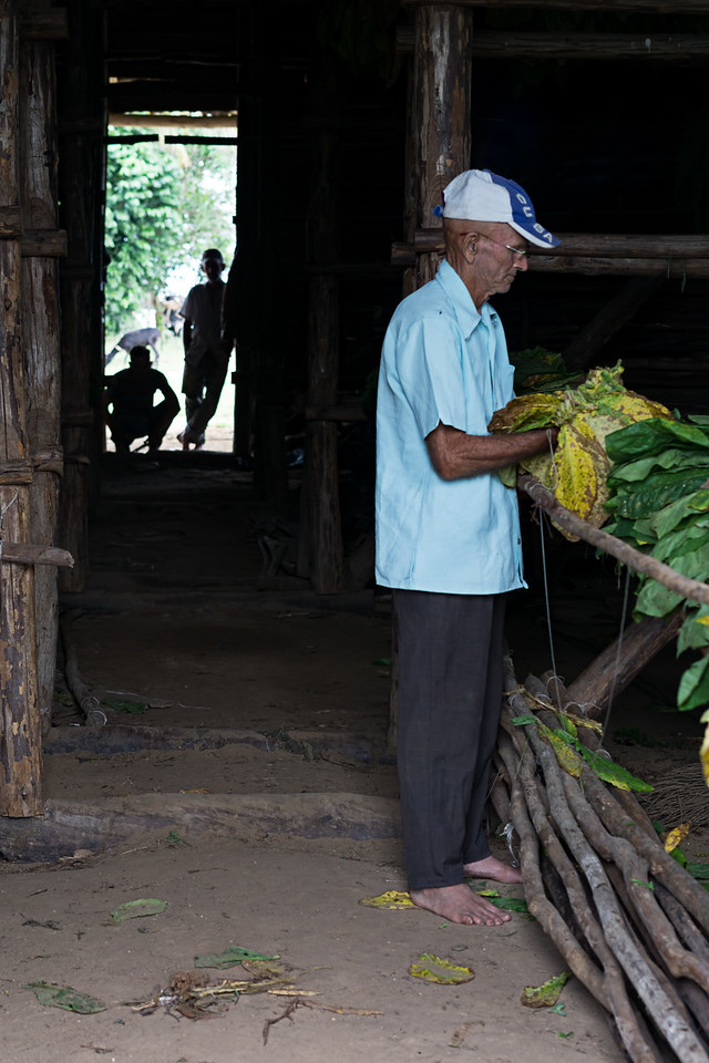 Tobacco House Worker