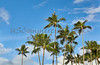 Tropical island palm trees and blue sky with clouds