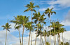 Hawaiian island palm trees and blue sky with clouds