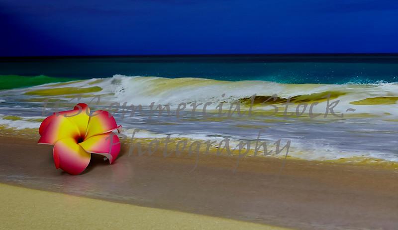 Pink Flower on Beach