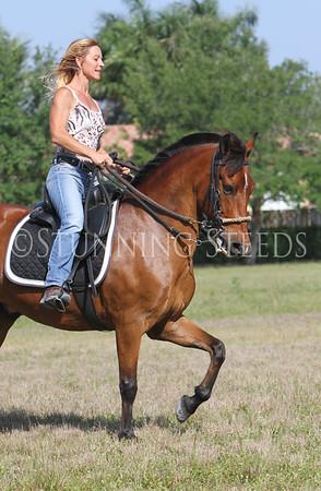 Romeo under saddle