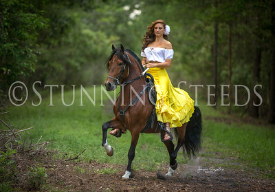 Cheri Prill Horses
