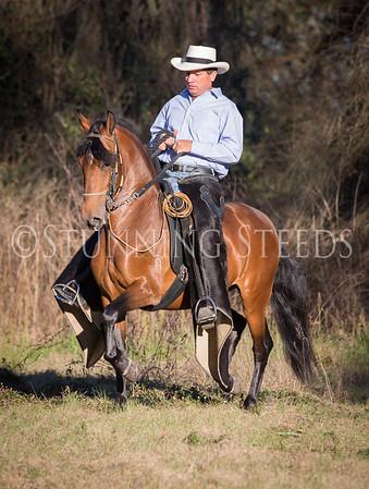 United Paso Fino Show Horses