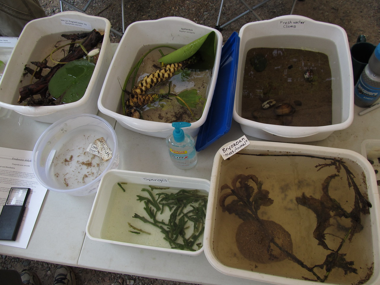 Freshwater jellyfish, sponges, clams and other curious biota were featured at this year's open house.