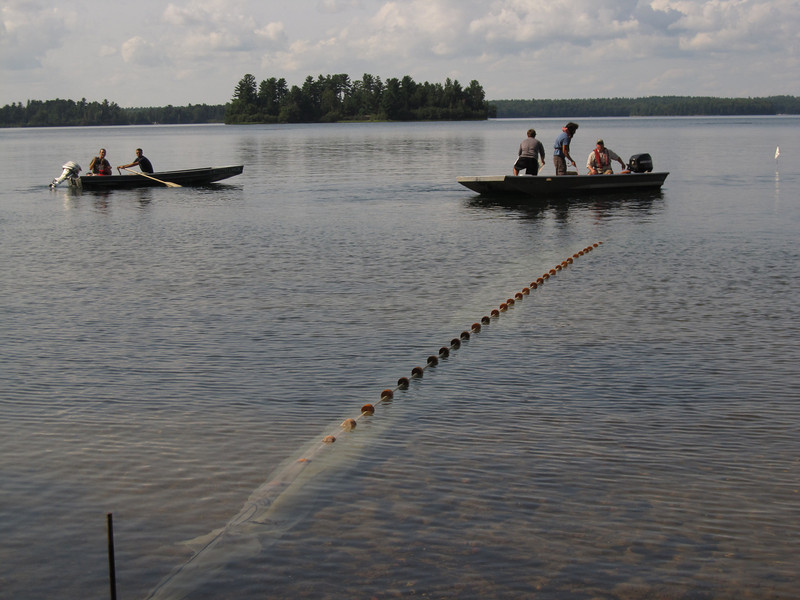 Researchers get ready to pull a fyke net, which is used to sample the fish community in a lake.