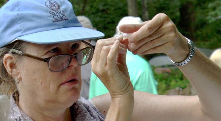 Examining ticks from a more comfortable distance- in a jar.