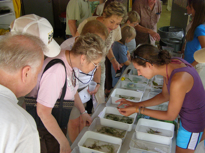 "An undergraduate student shows visitors some of the native and invasive ""look a-likes"" from area lakes."
