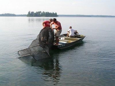 Zach Lawson, Eric Brown and Jordan Read get in position to lift the fyke net's trap on board, relieved to see quite a few smallmouth and bluegill wriggling in the net.