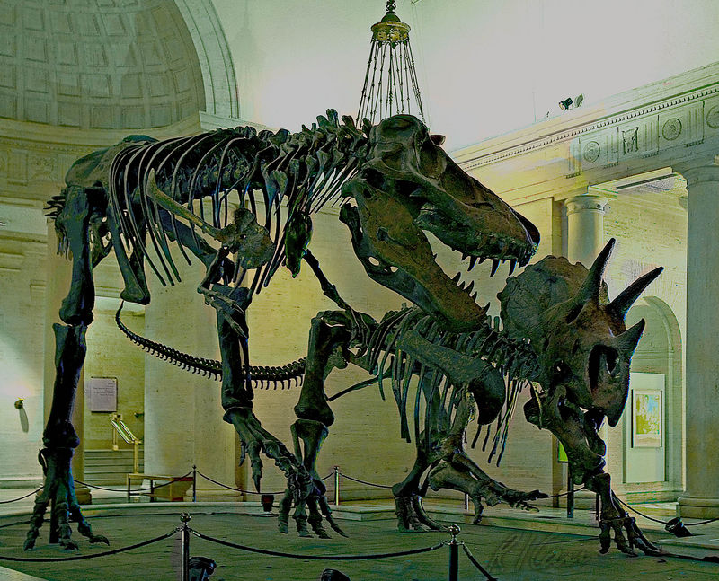 Dinosaur skeleton photos: Dueling dinosaurs: full skeletons of Tyrannosaurus Rex on left and stegosaurus in famous battle in Rotunda of Los Angeles County Museum of Natural History. January 2006.