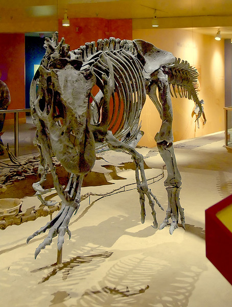 Dinosaurs, prehistoric animals: Allosaurus fragilis, from Colorado, is a large meat eating dinosaur of the Late Jurassic period, about 150 million years ago. National Museum of Natural History, Washington, DC, November 2006.