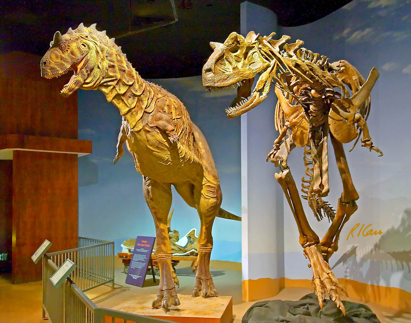 Dinosaur skeleton photos: Carnotaurus was a large flesh eating dinosaurus in South <br /> America 70 million years ago. skeleton artists reconstruction Patagonia, Argentina. Los Angeles County Museum of Natural History