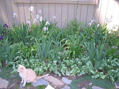 06_16_06 Kitty and Iris Bed