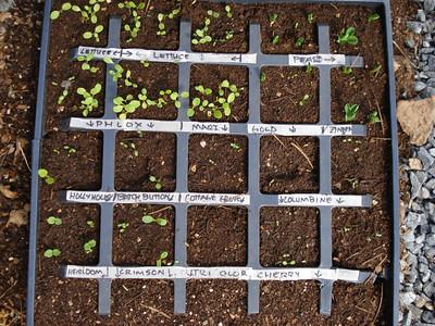 Seed Tray 05_11_2007