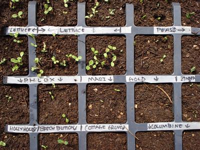 Seed Starting 05-09-2007