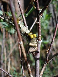 Caterpillar 05_21_2007