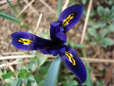 04_29_2007 Iris
