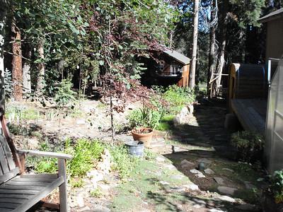 Side Yard 08-01-2010