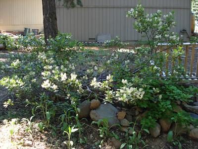 Backyard garden Natives
