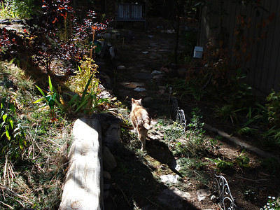 Front Garden and Kitty
