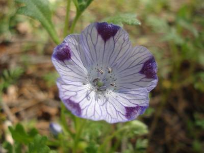 Garden 06-06-2015