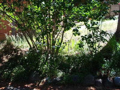 Garden 07-23-2016