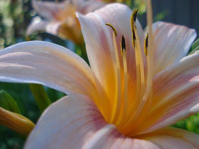 Garden 08-16-2012