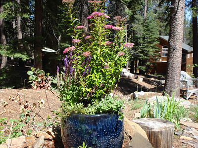 Birthday Plant Pot and Dragonfly Aster, Salvia, Thyme and Catmint