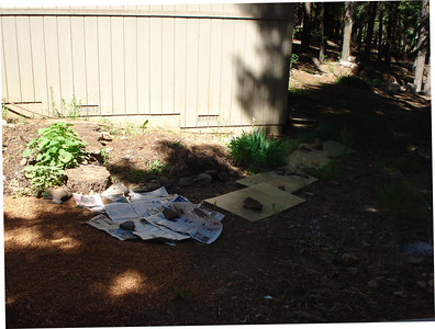 Backyard Garden Project