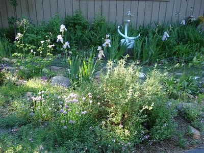 Garden 06/19/2012