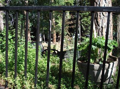 Garden 07-02-2012 Amy's Kale