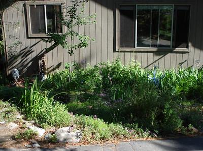 Garden 07-02-2012 Front Garden