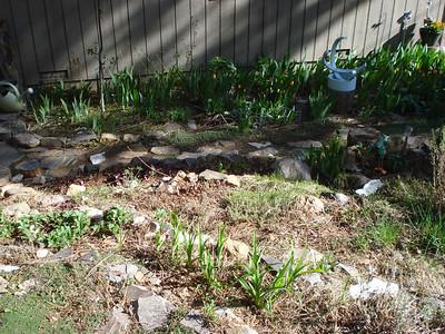 Garden 05-10-2012 Front Yard