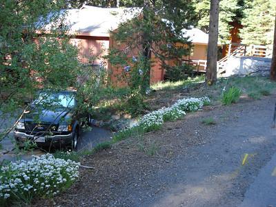 Garden 06/01/2012