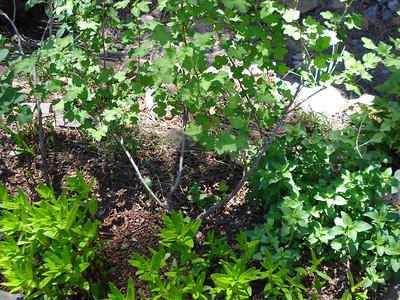 Garden 06/07/2012