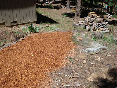 Compost and Path 06-28-2012